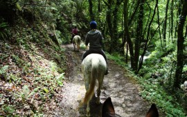 Paseo por caballo